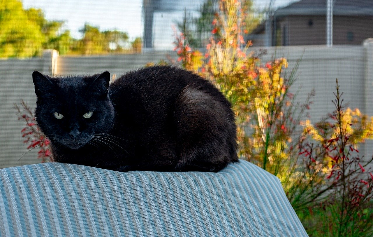 Adopt Unwanted Feral Cats and Put Them to Work