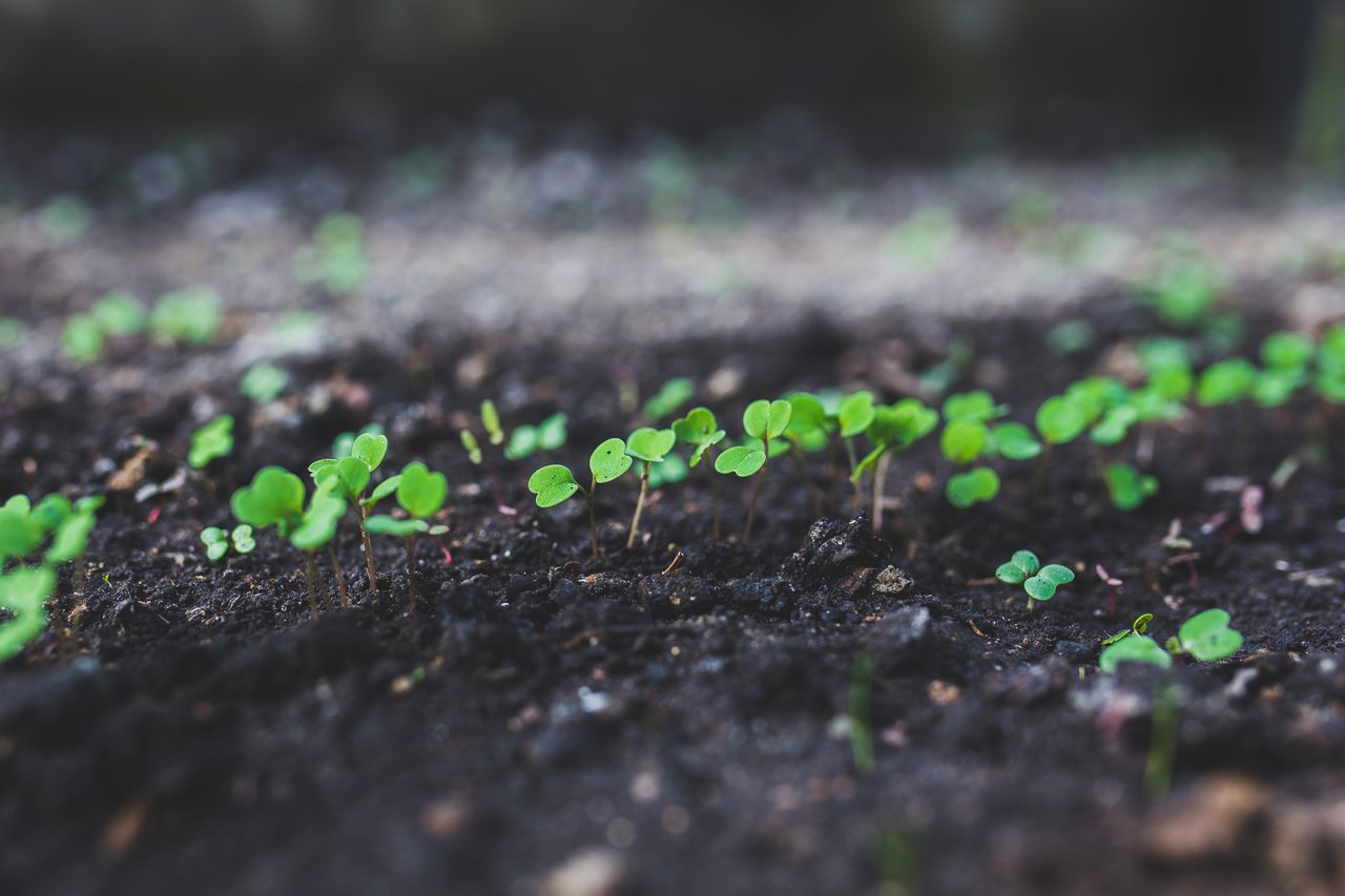 Know the Difference Between Your Seedlings and Weeds